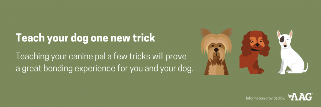 Teach your dog one new trick